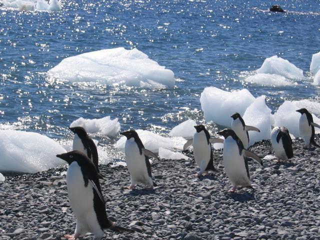 pinguins-antarctica